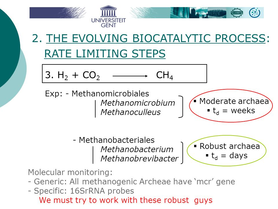 2. THE EVOLVING BIOCATALYTIC PROCESS: RATE LIMITING STEPS
