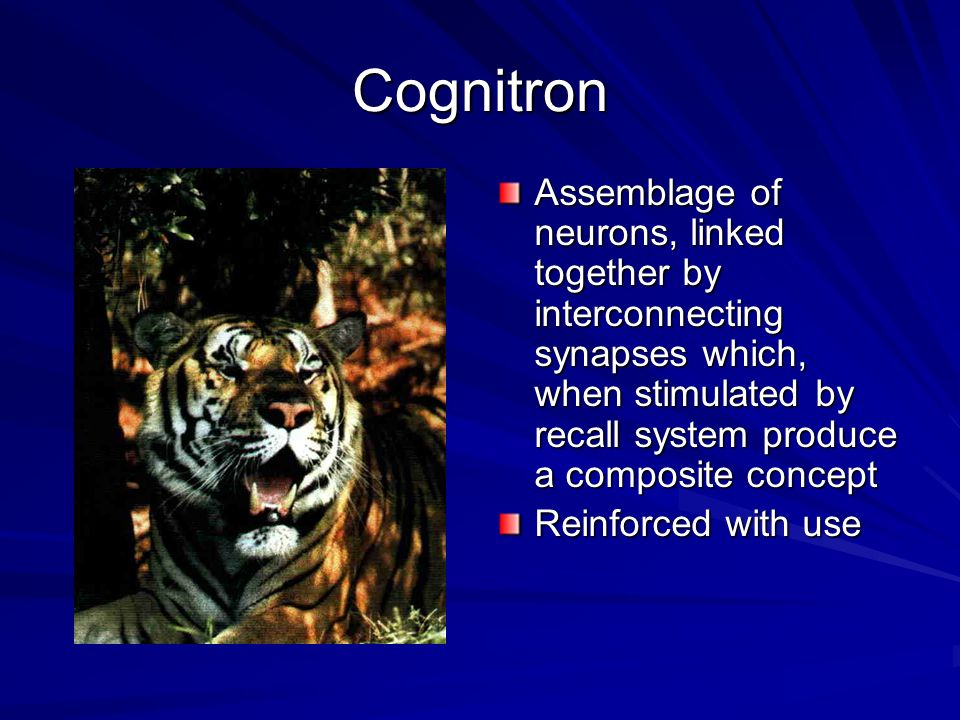 Cognitron Assemblage of neurons, linked together by interconnecting synapses which, when stimulated by recall system produce a composite concept.