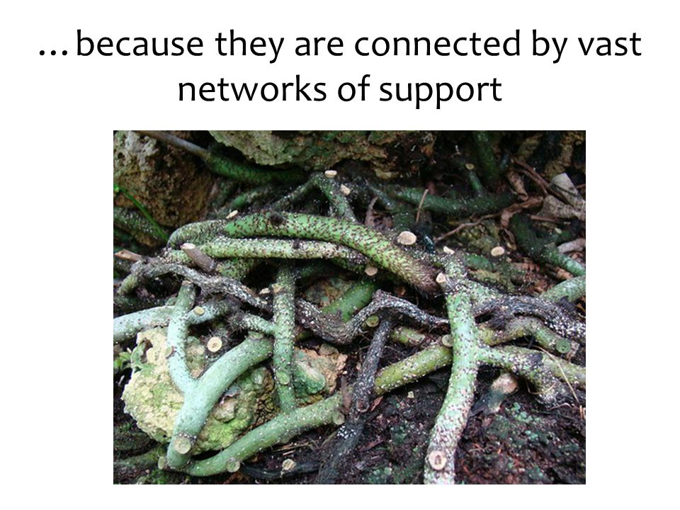 …because they are connected by vast networks of support
