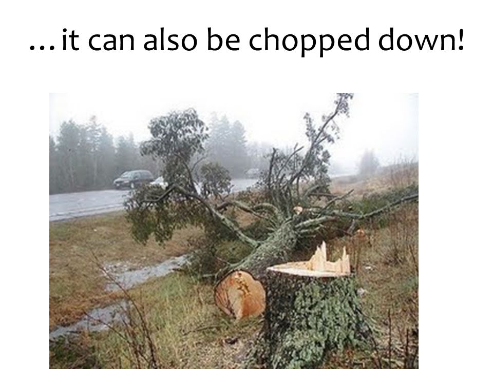 …it can also be chopped down!