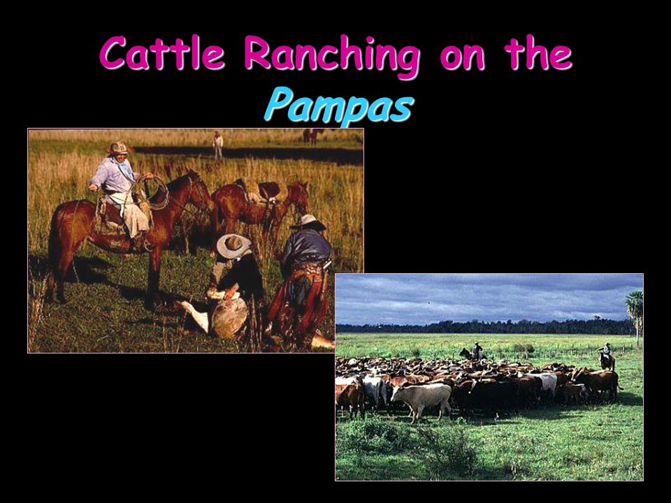 Cattle Ranching on the Pampas