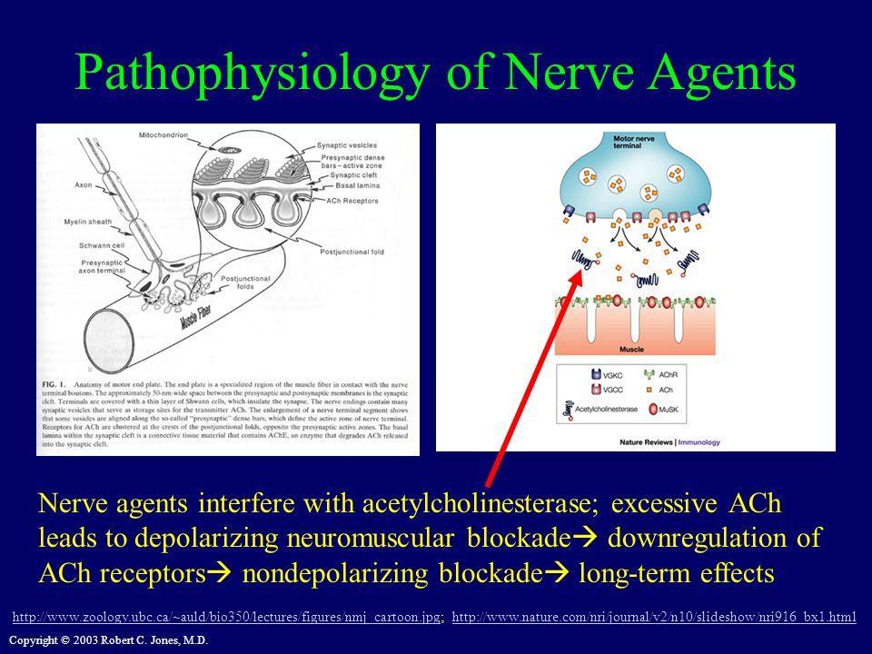 Pathophysiology of Nerve Agents