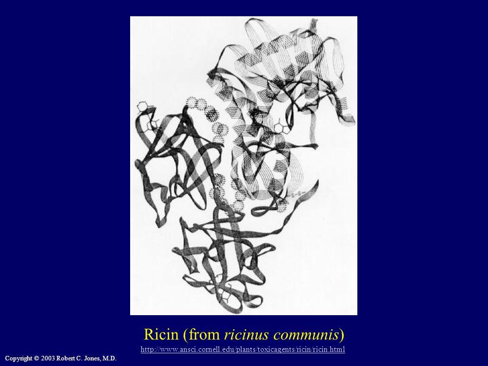 Ricin (from ricinus communis)