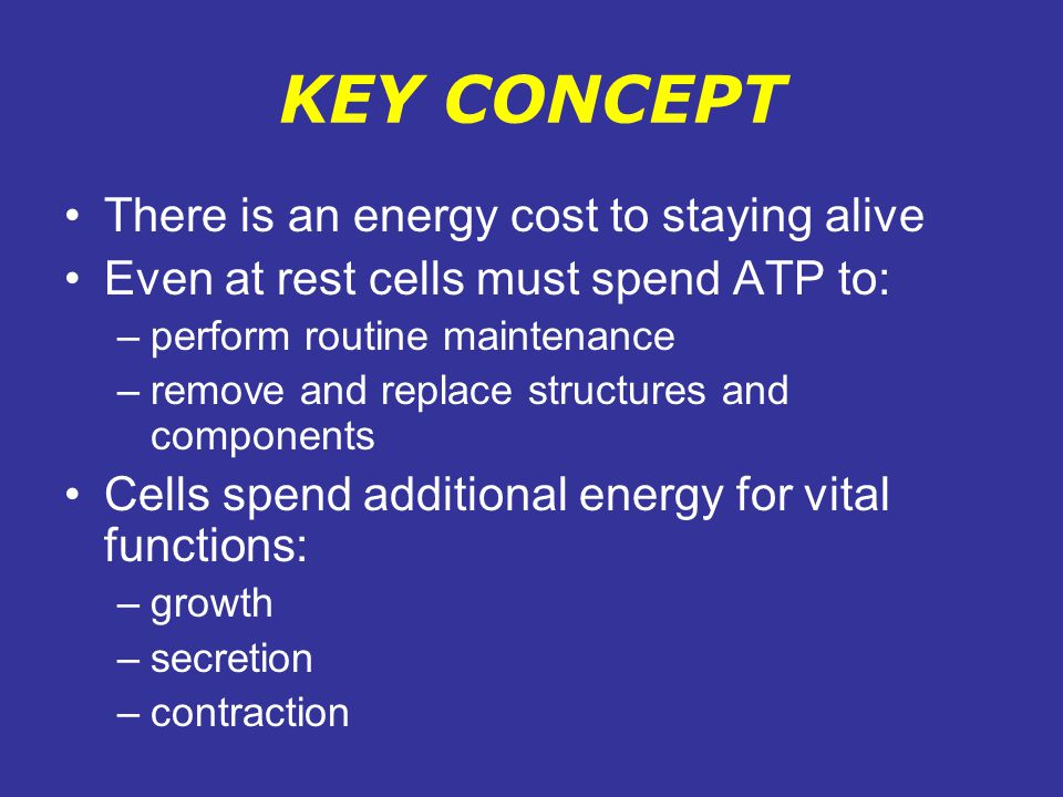 KEY CONCEPT There is an energy cost to staying alive