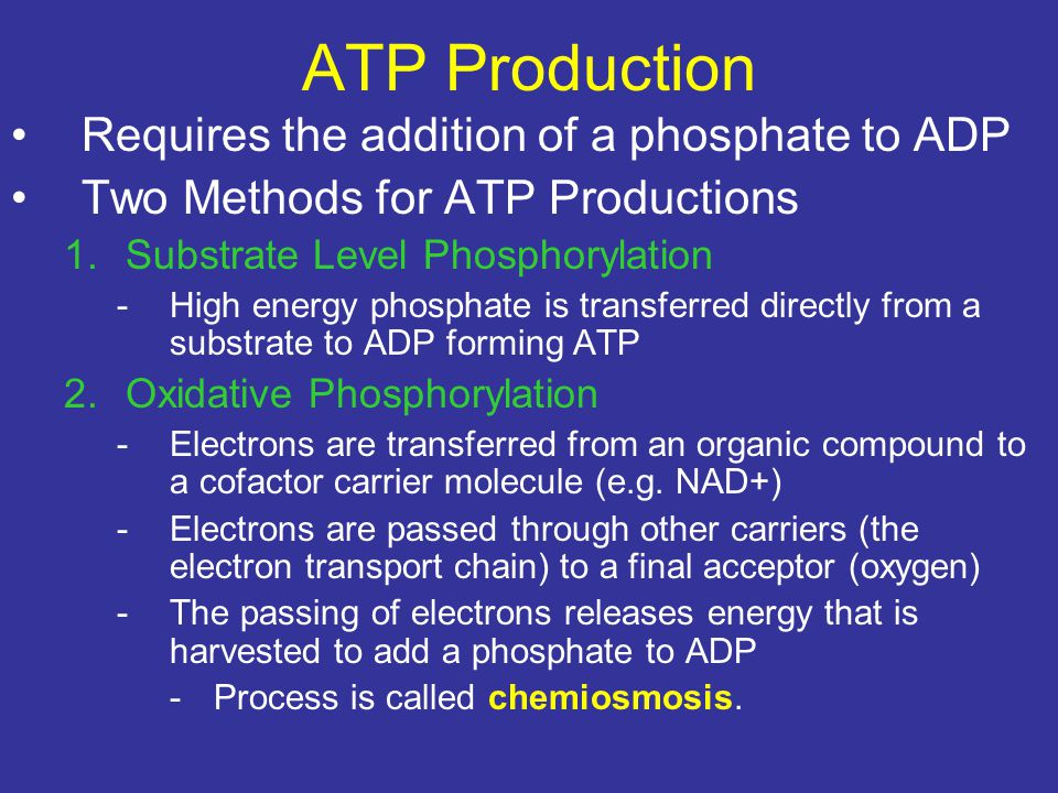 ATP Production Requires the addition of a phosphate to ADP