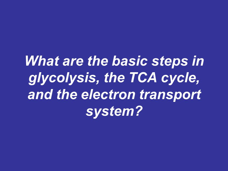 What are the basic steps in glycolysis, the TCA cycle, and the electron transport system