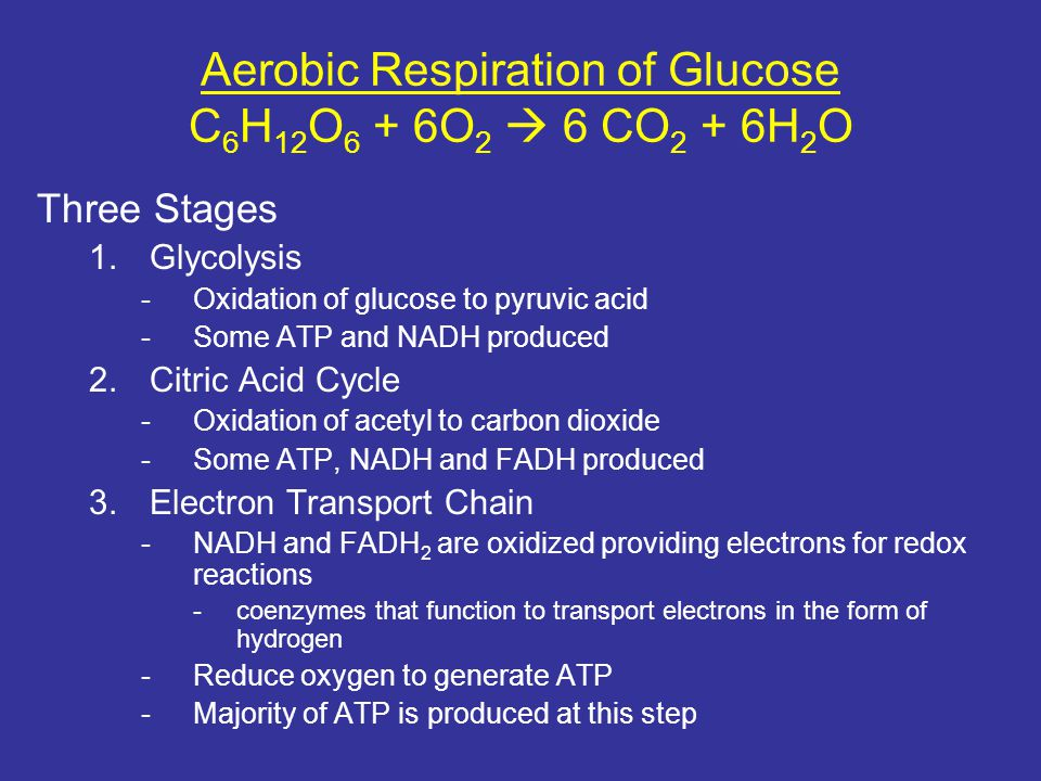 Aerobic Respiration of Glucose C6H12O6 + 6O2  6 CO2 + 6H2O