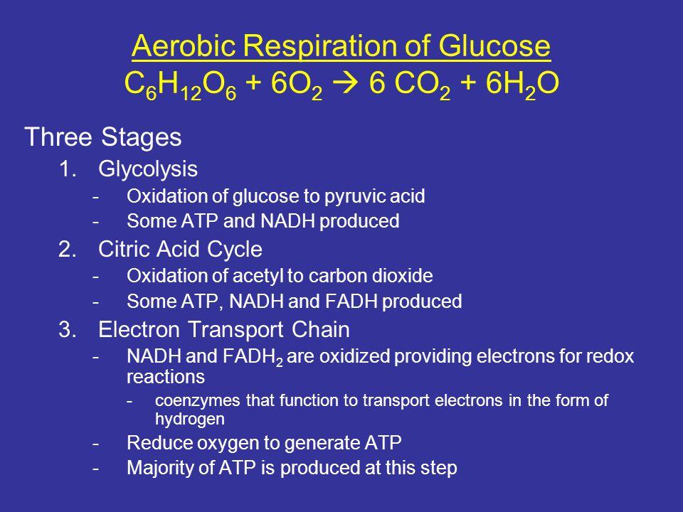 Aerobic Respiration of Glucose C6H12O6 + 6O2  6 CO2 + 6H2O