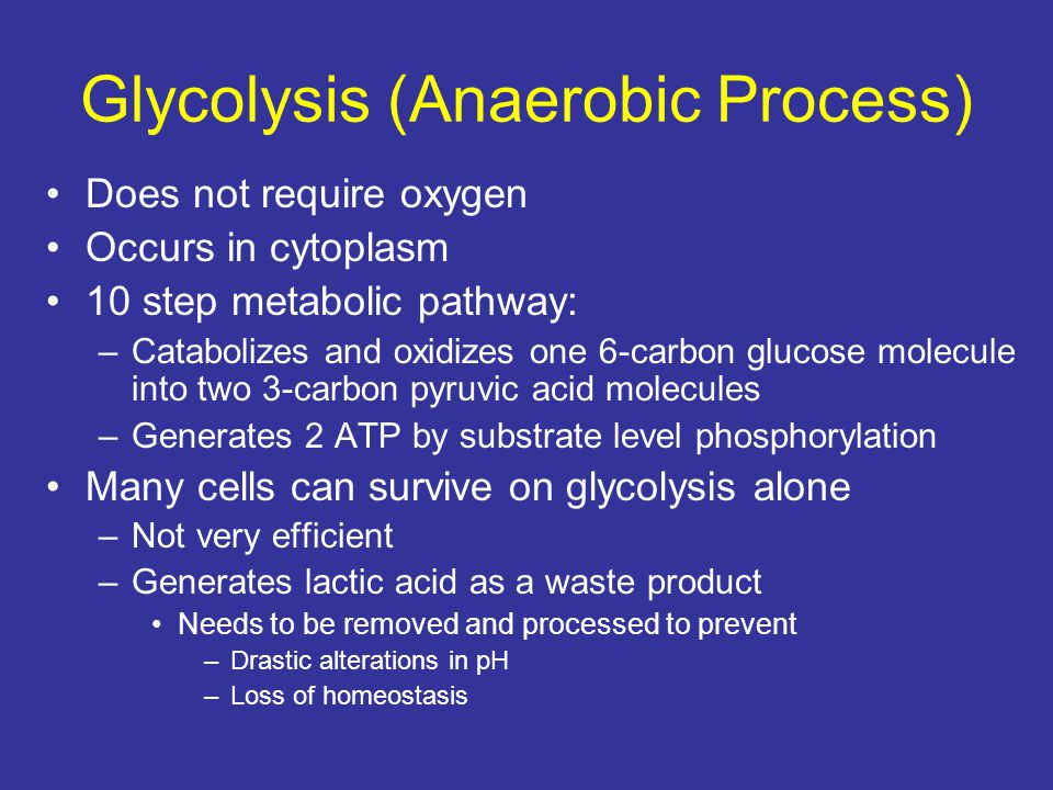 Glycolysis (Anaerobic Process)