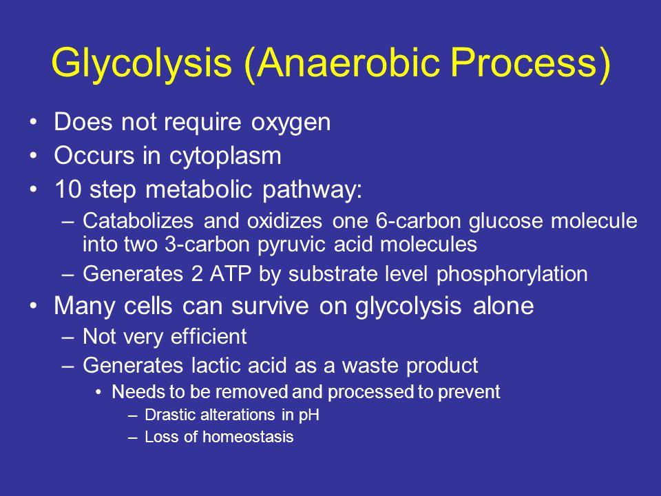 Glycolysis (Anaerobic Process)