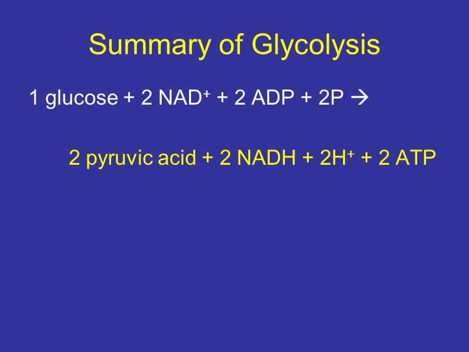 Summary of Glycolysis 1 glucose + 2 NAD+ + 2 ADP + 2P 