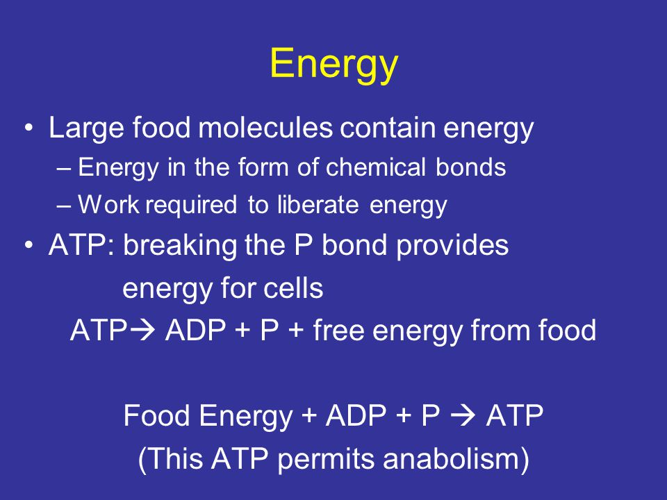 Energy Large food molecules contain energy