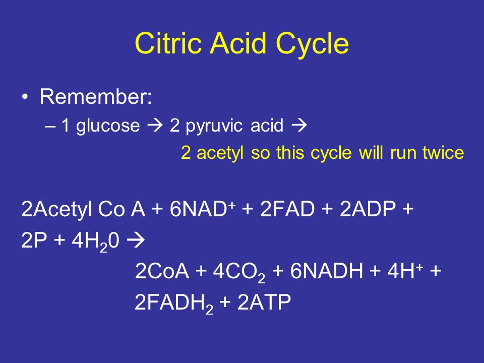 Citric Acid Cycle Remember: 2Acetyl Co A + 6NAD+ + 2FAD + 2ADP +