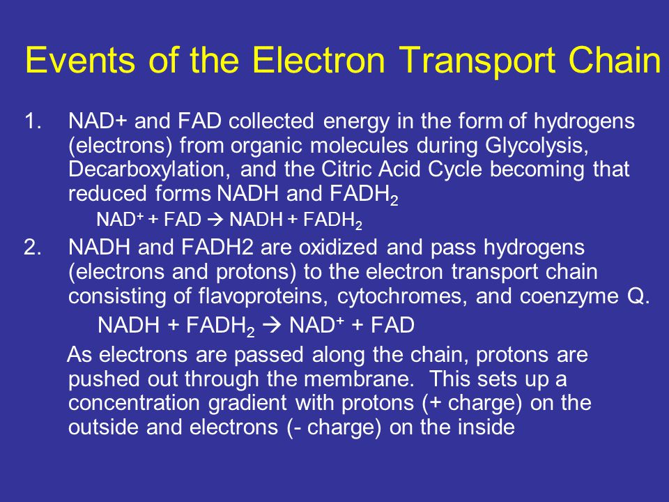 Events of the Electron Transport Chain