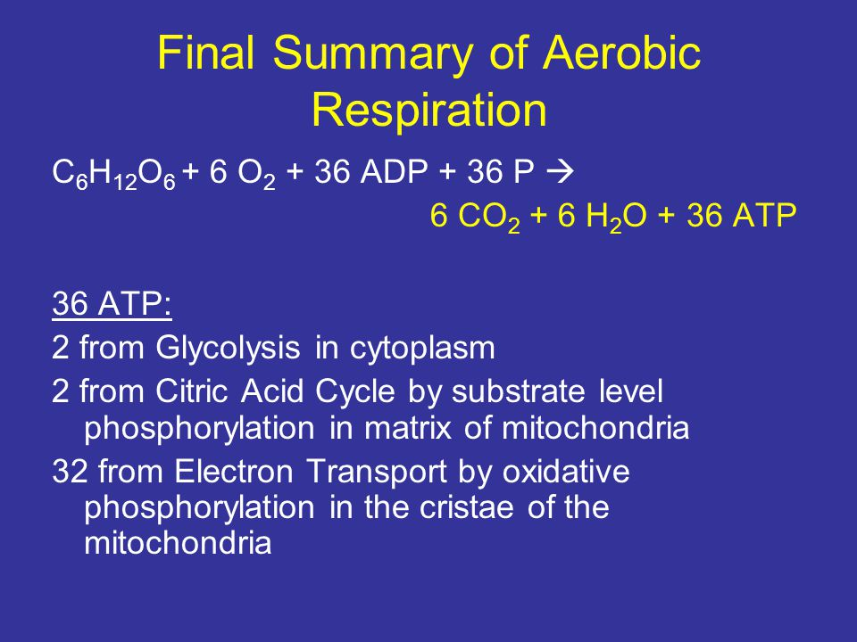 Final Summary of Aerobic Respiration