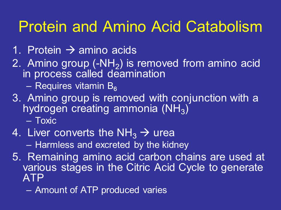 Protein and Amino Acid Catabolism