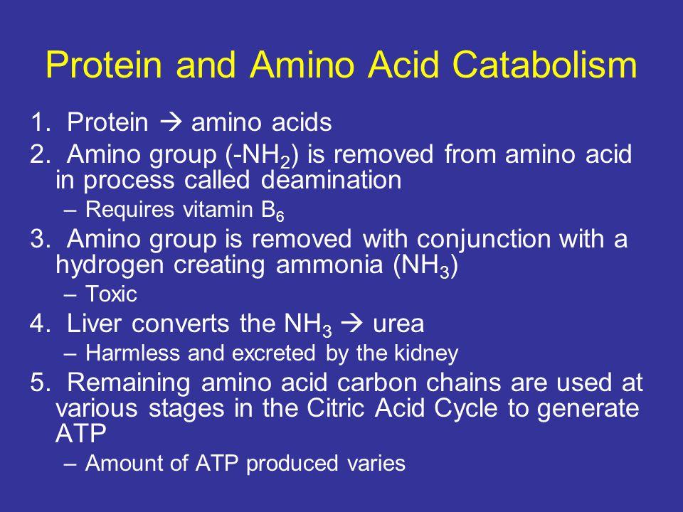 Protein and Amino Acid Catabolism