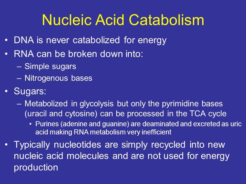 Nucleic Acid Catabolism