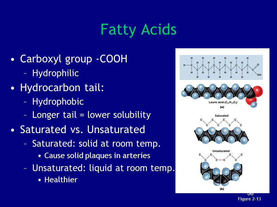 Fatty Acids Carboxyl group -COOH Hydrocarbon tail: