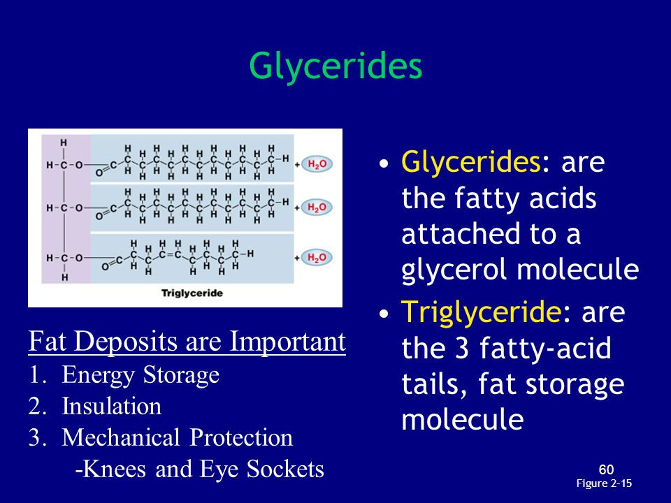Glycerides Glycerides: are the fatty acids attached to a glycerol molecule. Triglyceride: are the 3 fatty-acid tails, fat storage molecule.