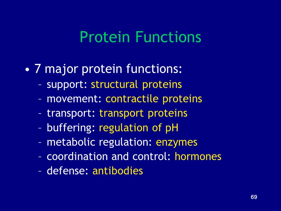 Protein Functions 7 major protein functions: