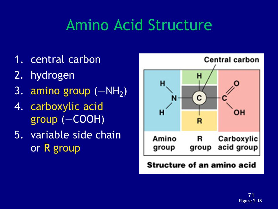 Amino Acid Structure central carbon hydrogen amino group (—NH2)