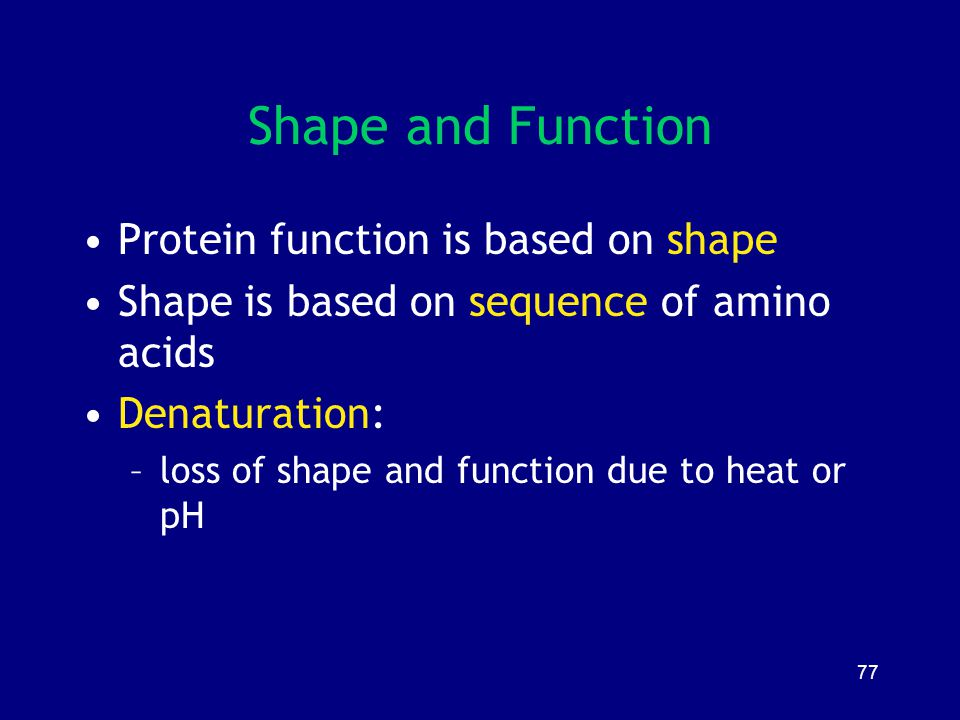 Shape and Function Protein function is based on shape