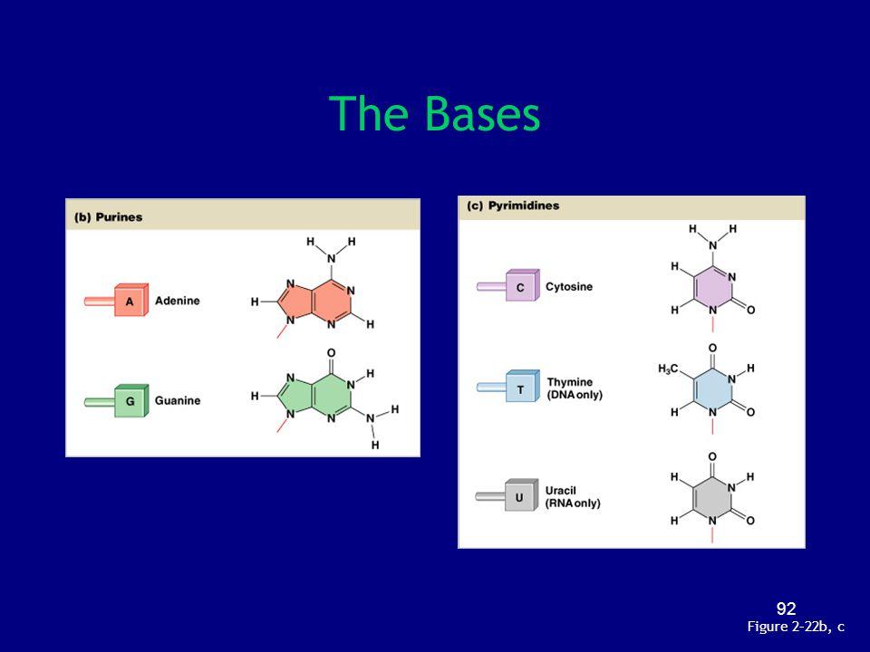 The Bases Figure 2–22b, c