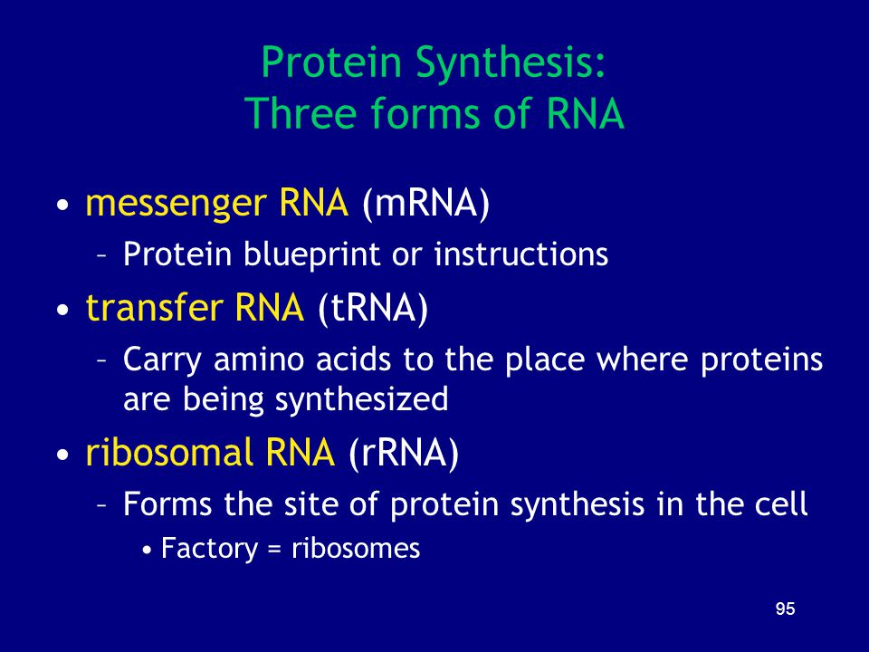 Protein Synthesis: Three forms of RNA