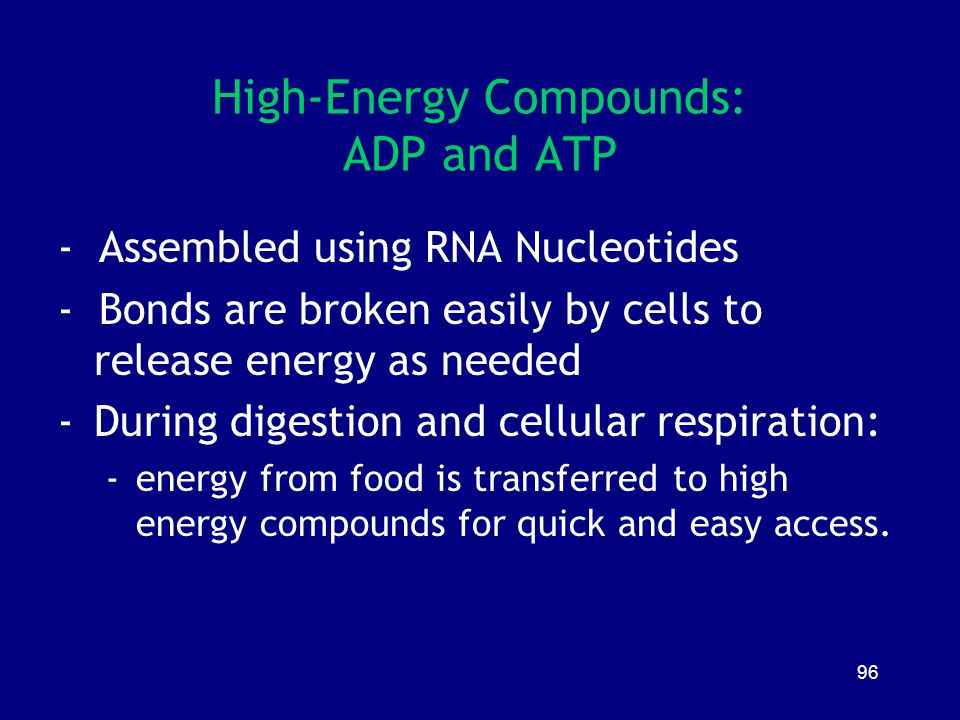 High-Energy Compounds: ADP and ATP