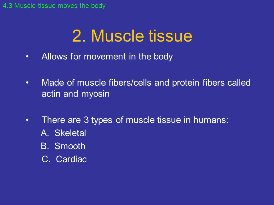 2. Muscle tissue Allows for movement in the body