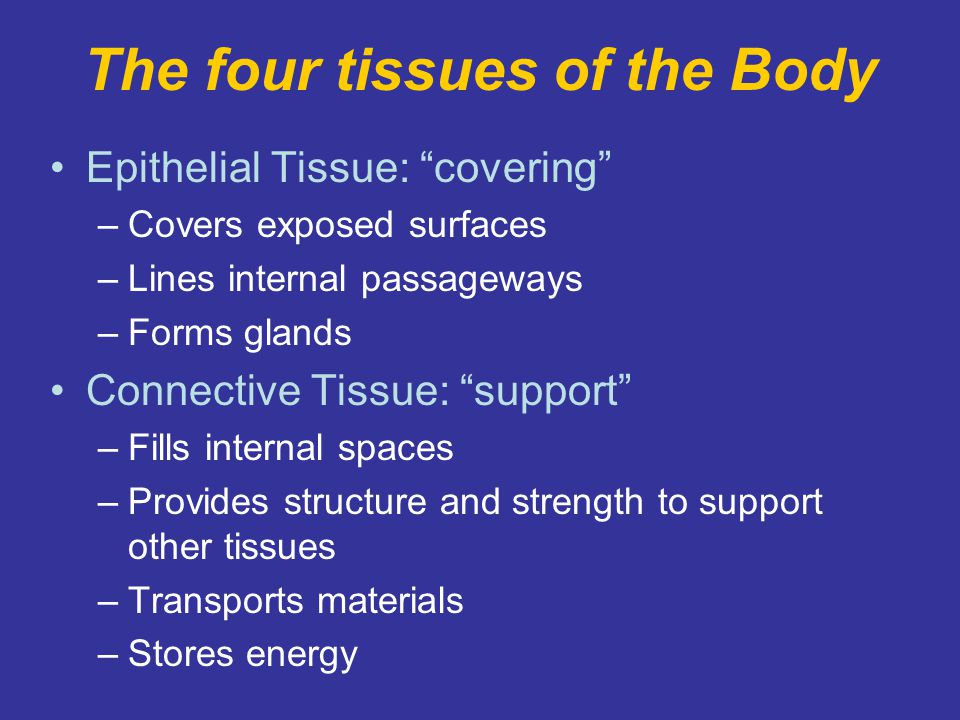 The four tissues of the Body