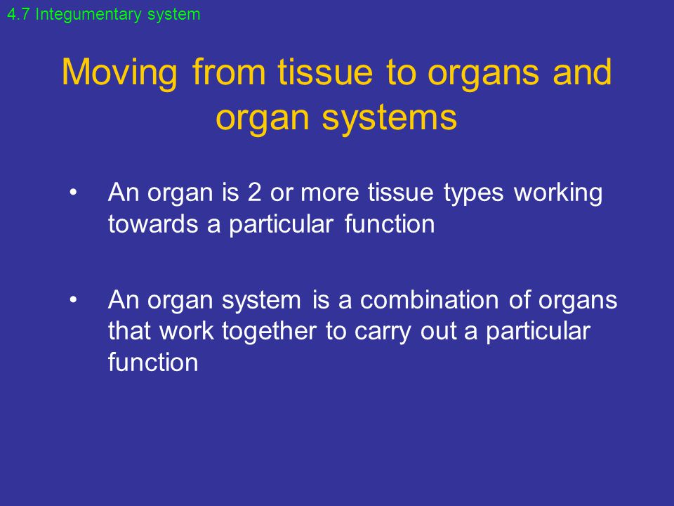 Moving from tissue to organs and organ systems