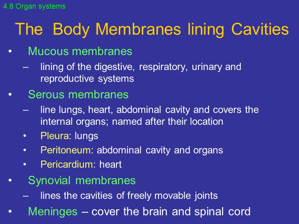 The Body Membranes lining Cavities
