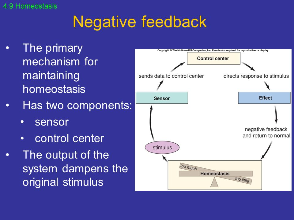 Negative feedback The primary mechanism for maintaining homeostasis