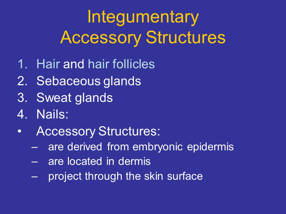 Integumentary Accessory Structures