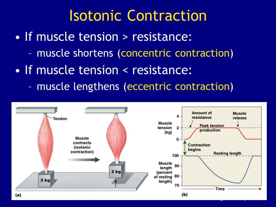 Isotonic Contraction If muscle tension > resistance: