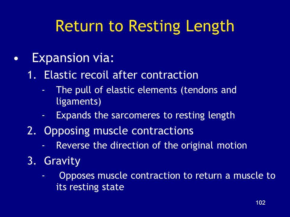 Return to Resting Length