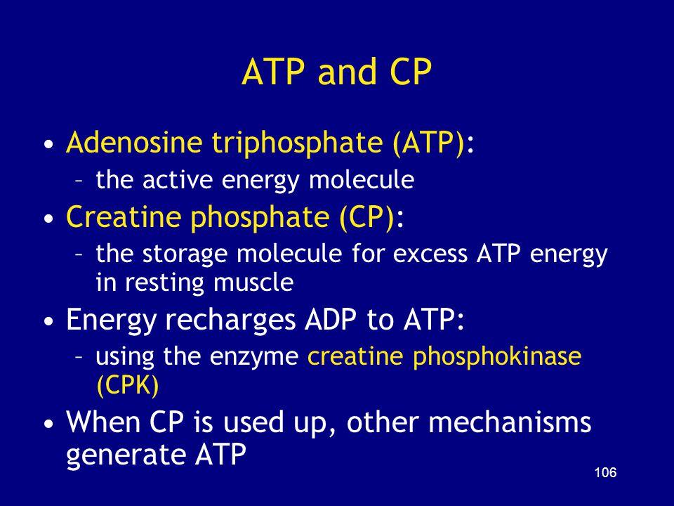 ATP and CP Adenosine triphosphate (ATP): Creatine phosphate (CP):