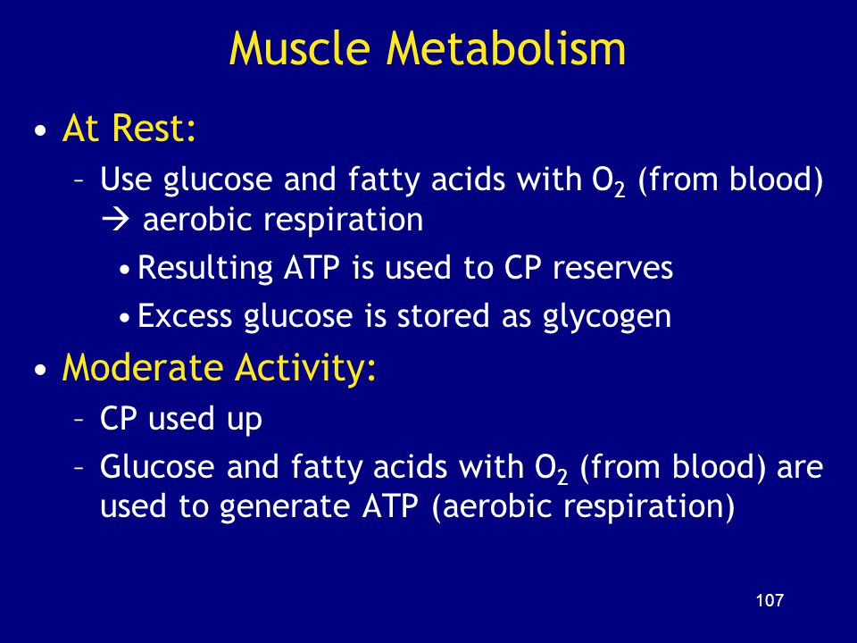 Muscle Metabolism At Rest: Moderate Activity: