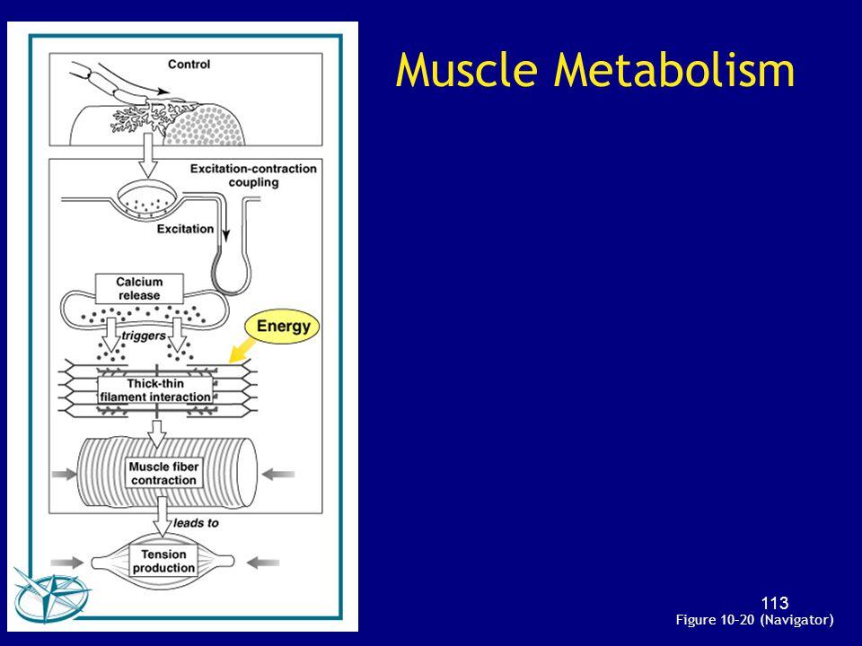 Muscle Metabolism Figure 10–20 (Navigator)