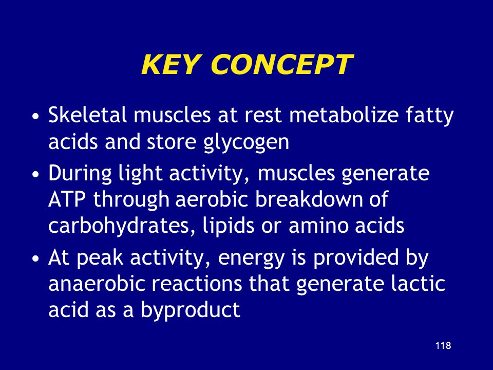 KEY CONCEPT Skeletal muscles at rest metabolize fatty acids and store glycogen.