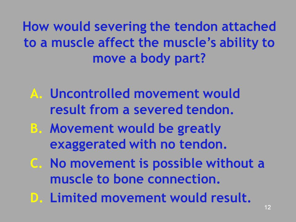 How would severing the tendon attached to a muscle affect the muscle's ability to move a body part
