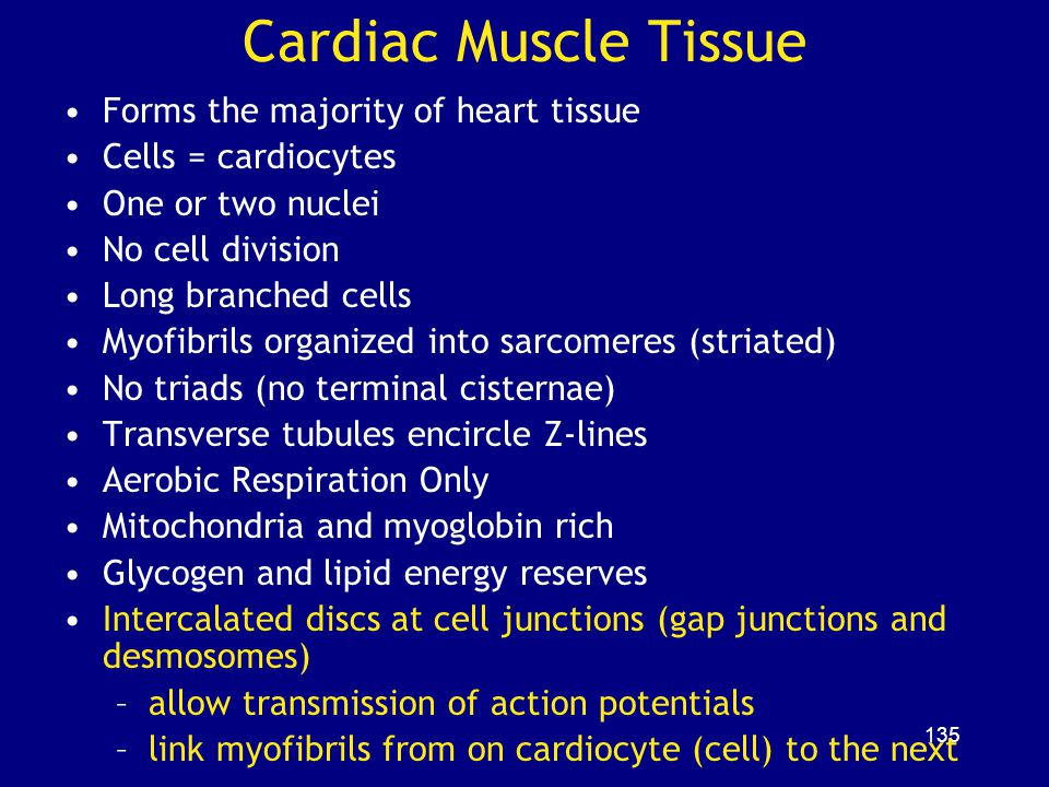 Cardiac Muscle Tissue Forms the majority of heart tissue