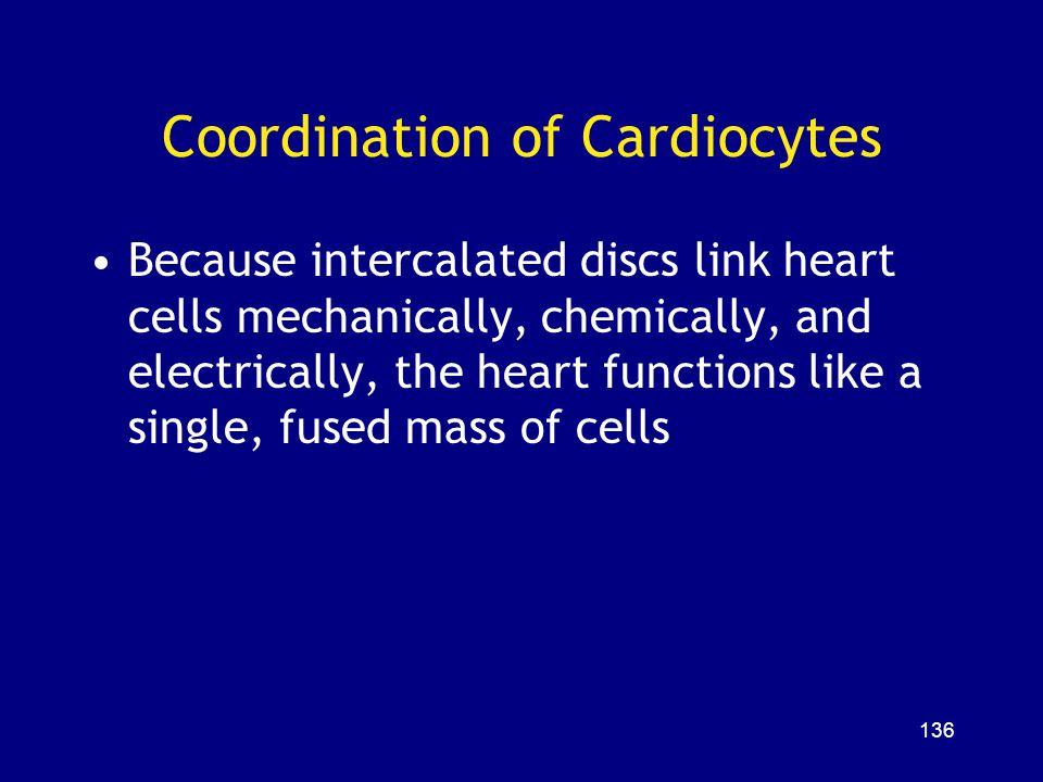 Coordination of Cardiocytes