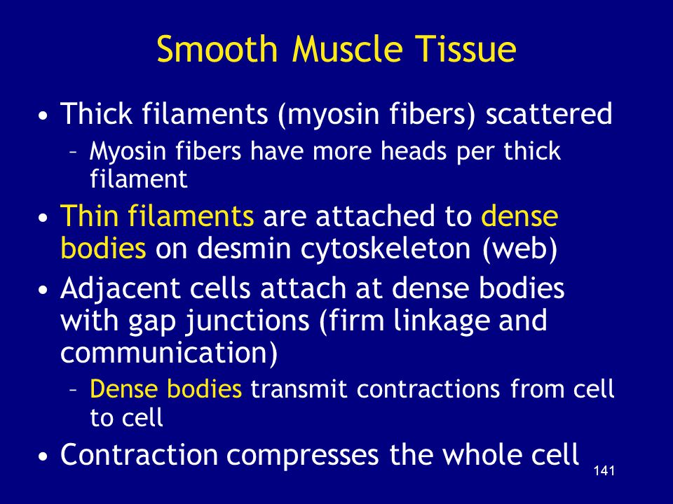 Smooth Muscle Tissue Thick filaments (myosin fibers) scattered
