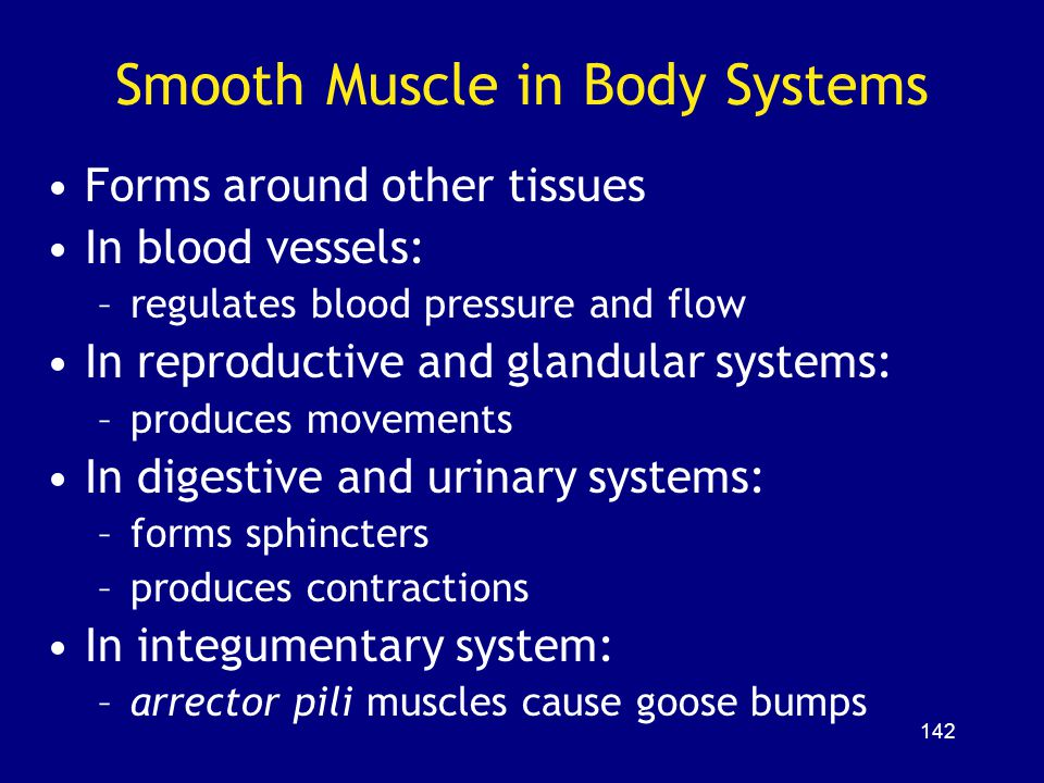 Smooth Muscle in Body Systems