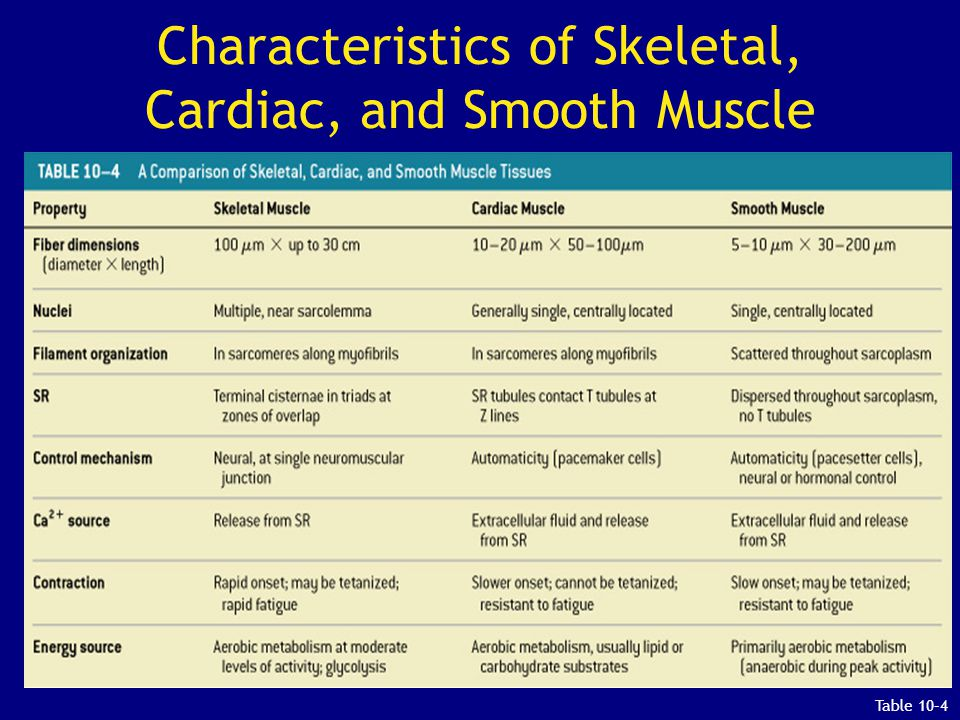 Characteristics of Skeletal, Cardiac, and Smooth Muscle