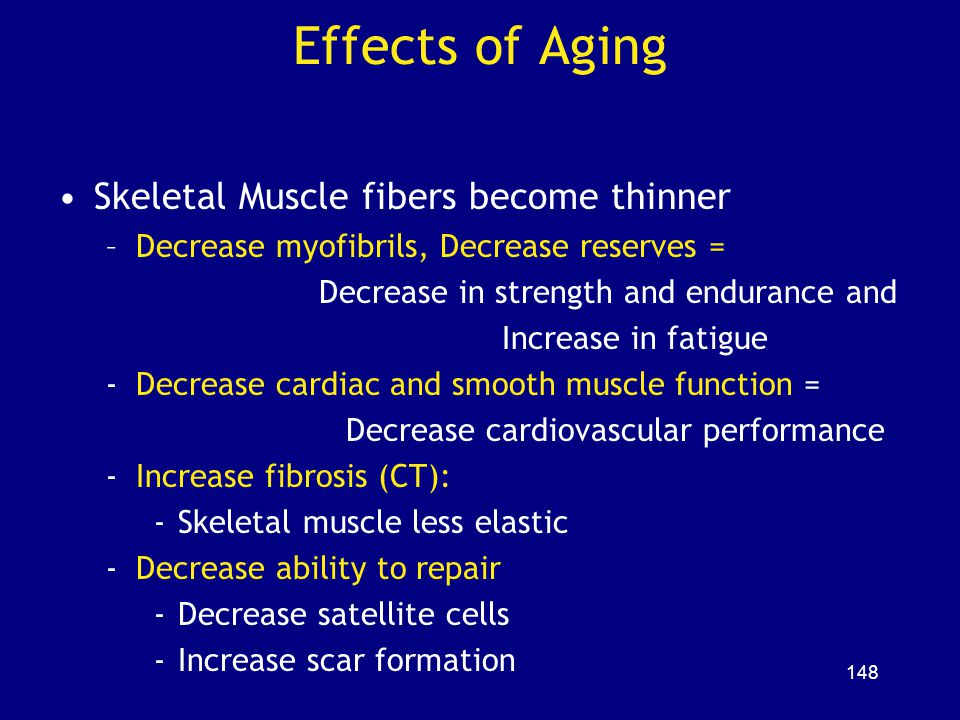 Effects of Aging Skeletal Muscle fibers become thinner