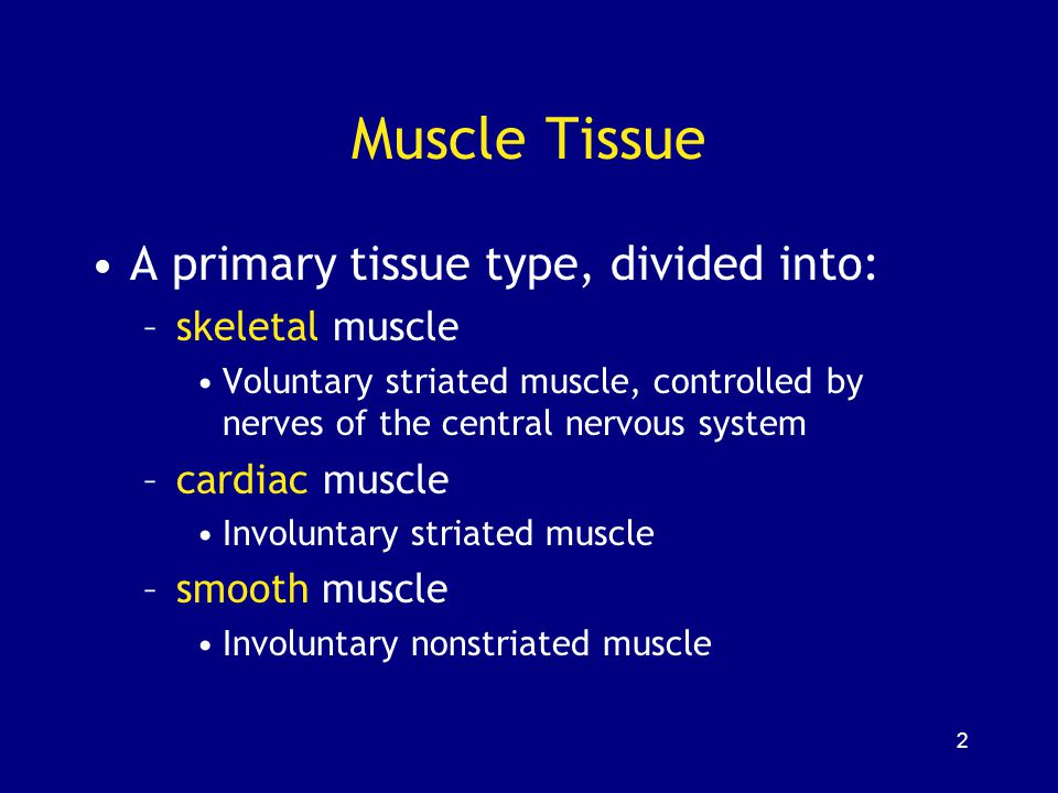 Muscle Tissue A primary tissue type, divided into: skeletal muscle